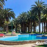 Canary Island palms pool and park ross pichilemu