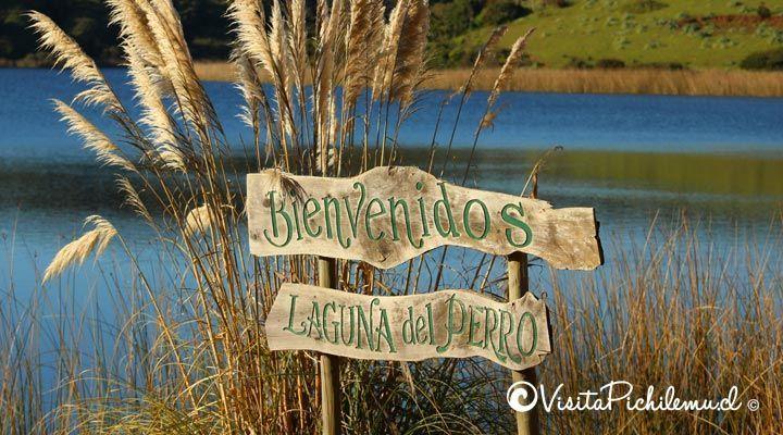 camping dog lagoon Cahuil, pichilemu