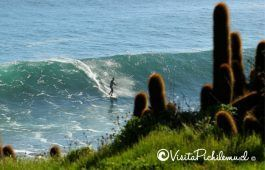 Wolf pointed surf pichilemu