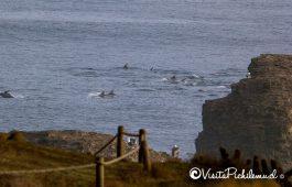 risso golfinhos lobos ponta